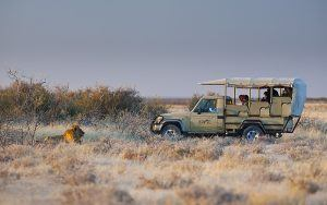 Reiseplanung durch den Etosha Nationalpark